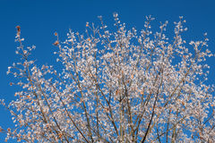 在白色霜的树 库存图片