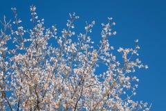 在白色霜的树 库存照片
