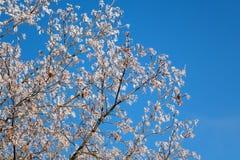 在白色霜的树 免版税库存照片