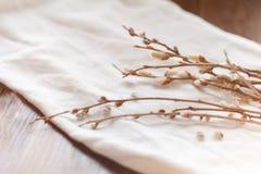 在白色织品的开花的杨柳分支 免版税图库摄影