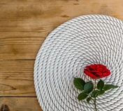 在白色绳索的美丽的红色玫瑰 库存图片