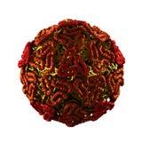 在白色-隔绝的西尼罗病毒 图库摄影
