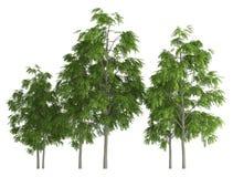 在白色3d例证连续隔绝的树 库存图片
