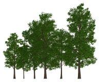 在白色3d例证隔绝的小组树 免版税库存图片