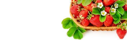 在白色bac隔绝的一个柳条筐的开胃草莓 库存图片