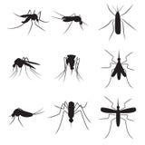 在白色bac隔绝的套黑剪影载体蚊子 免版税库存图片