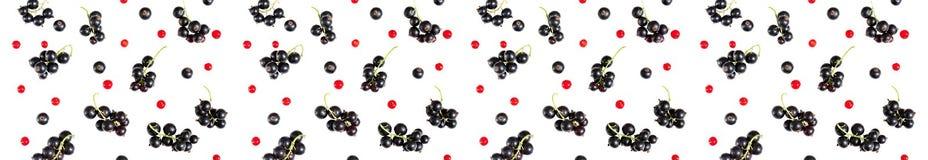 在白色backg隔绝的黑醋栗和红浆果莓果  图库摄影