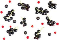 在白色backg隔绝的黑醋栗和红浆果莓果  库存照片