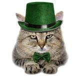 在白色backgroun和领带蝴蝶的猫隔绝的一只绿色帽子 免版税库存图片