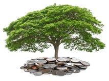 在白色backgroun的想法概念树成长节约金钱孤立 免版税图库摄影
