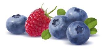 在白色backgroun的森林莓果水平的compositon 库存照片