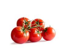 在白色backround隔绝的新鲜的红色蕃茄分支  图库摄影