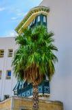 在白色buidling附近的枣椰子在Hammamet突尼斯 库存图片