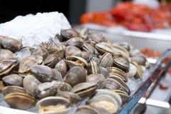 在白色FOT板材晚餐的大新鲜的蛤蜊 免版税库存照片