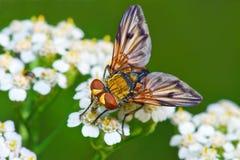 在白花的五颜六色的飞行在绿色背景 免版税图库摄影