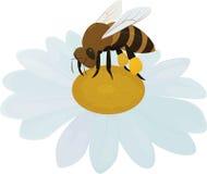 在白花的动画片棕色蜂 免版税图库摄影