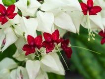 在白花的雨下落 库存照片