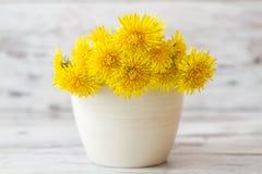 在白花罐的黄色蒲公英 库存图片