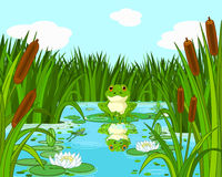 在百合的青蛙 免版税图库摄影