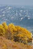 在百花山山和遥远的深蓝山的金黄白桦树 免版税图库摄影