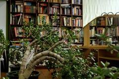 在的书木shelfs 在木架子的老和新书 库存图片