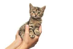 在的小猫手 库存照片