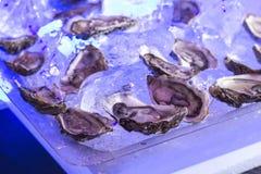 在的新鲜的未加工的牡蛎被镀的 免版税库存照片