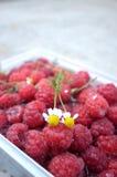 在的春黄菊花新鲜的莓 库存照片