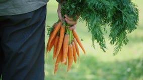 在的有机红萝卜农夫递 股票视频