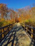 在的森林桥梁 免版税图库摄影