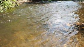 在的流动的水小小河在森林里 影视素材