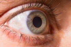 在的特写镜头蓝眼睛 虹膜 免版税图库摄影