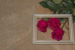 在的玫瑰2月十四日 图库摄影