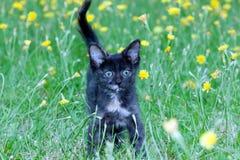 在的笨拙的小的小猫 免版税库存照片