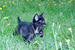 在的笨拙的小的小猫 库存照片