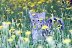 在的笨拙的小的小猫 库存图片