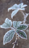 在的第一早晨霜植物, 库存图片