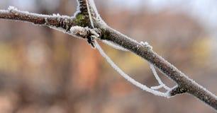 在的第一早晨霜植物, 免版税库存图片