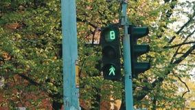在的红绿灯交叉路 影视素材