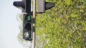 在的红绿灯交叉路 股票录像
