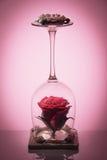 在的自然玫瑰色花被翻转在与蜡烛的酒杯反射性表面和梯度软的红色背景上 免版税库存图片