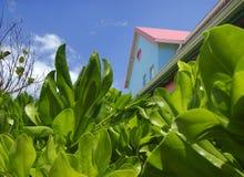 在的色的屋顶gardes 库存照片