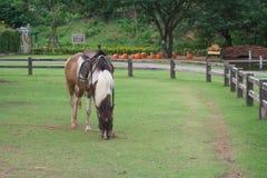 在的马被归档的 库存图片