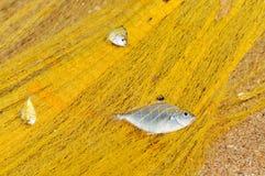 在的鱼捕鱼网 图库摄影