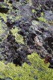 在的绿色和黑lychens rosky下层 库存图片