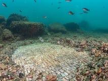 在皇帝Claudio's Ninfeum的简单的马赛克 水下, archeo 库存图片