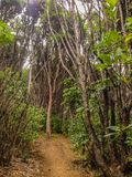 在皮克顿,南岛,新西兰附近的豪华的雨林 免版税库存图片