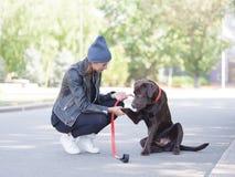 在皮带的一条狗给一个爪子他的女主人 库存图片