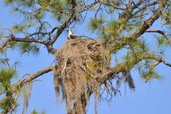在盐春天奔跑的白鹭的羽毛巢 库存照片