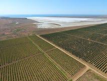 在盐湖附近的葡萄园 在视图之上 库存照片
